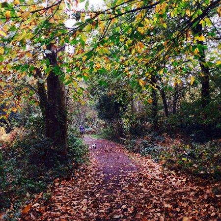 Kenilworth, UK: photo6.jpg