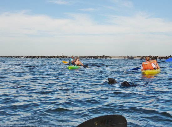 Walvis Bay, Namibia: Pelican Point Kayaking
