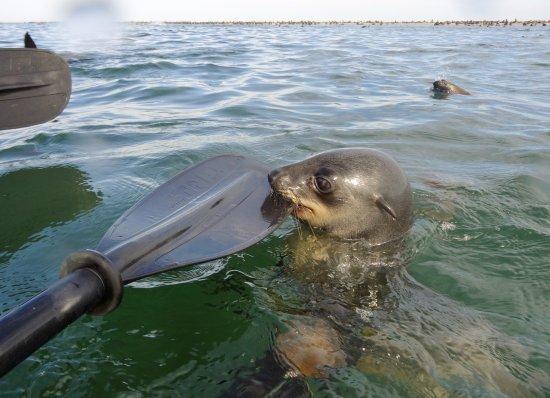 Walvis Bay, Namibia: Pelican Point Kayaking