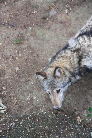 Ardeche, France: loup vu du haut