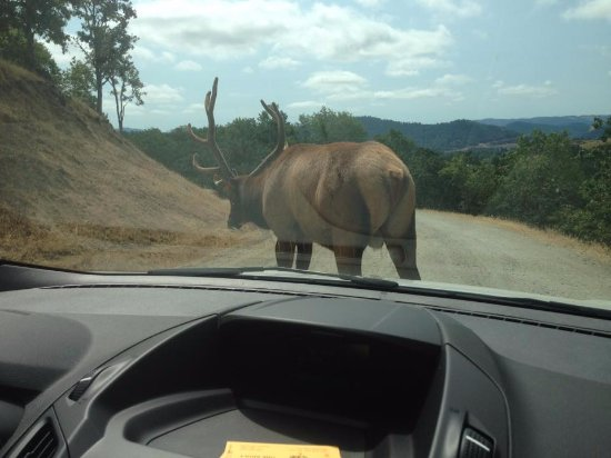 Winston, OR: This guy was huge and he had just walked along side the car.