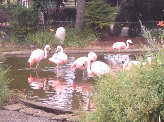 Winston, OR: Flamingos are very pretty and pink.