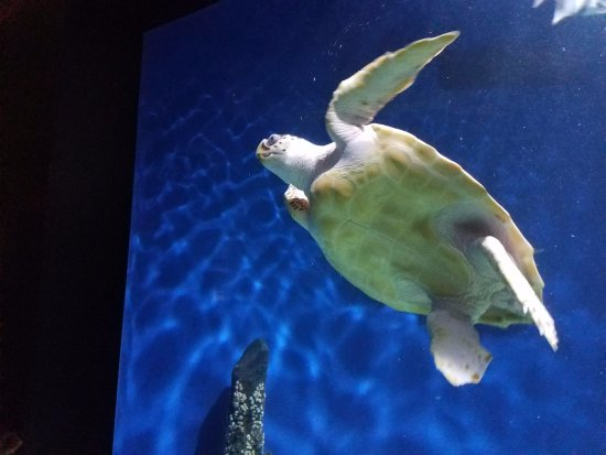 Newport News, VA: Sea turtle in the aquarium