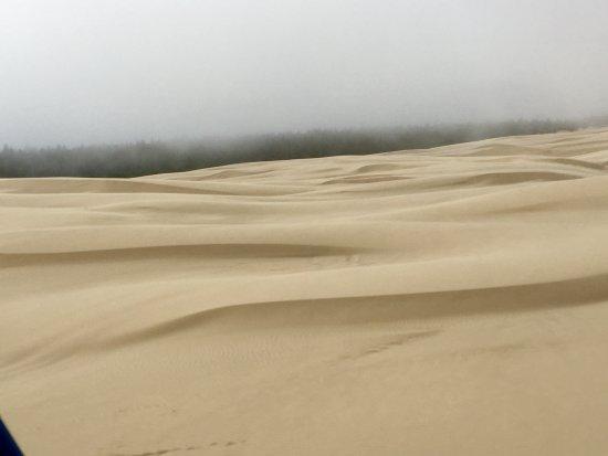 Reedsport, OR: Oregon Dunes