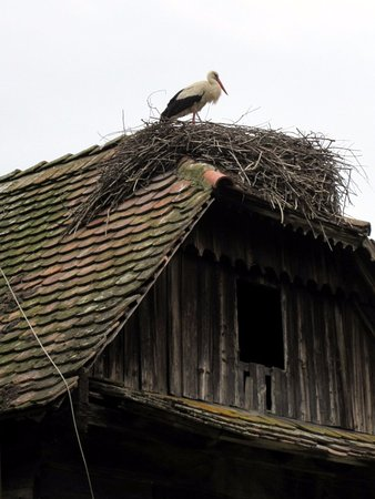 Kutina, Croatia: Stork on the roof