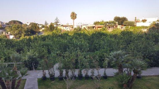 Hotel Zaro: Limonaia