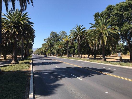 Palo Alto, CA: photo0.jpg