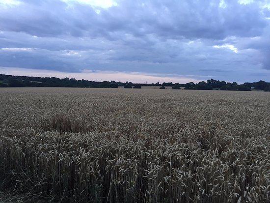 Halesworth, UK: Beautiful view from a nearby walk from the campsite