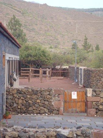 Santiago del Teide-billede