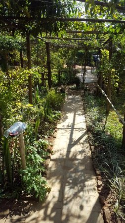 Mzuzu, Malawi: Nice garden path leading to restaurant area