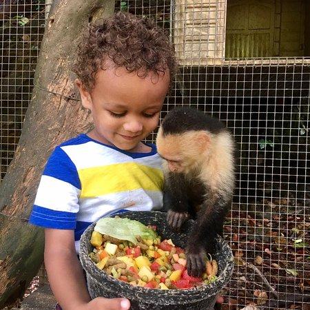 Maya Key: Monkeys- the highlight of our trip