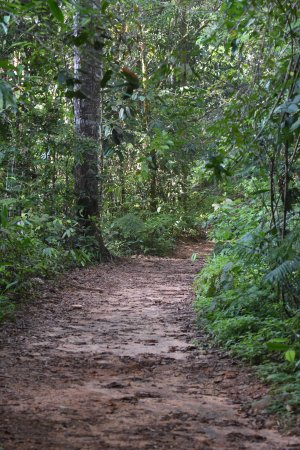 Sinharaja Forest Reserve: Typical track
