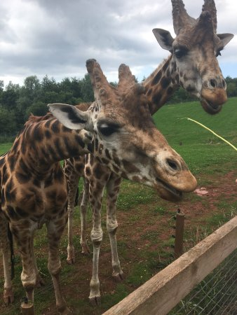 Dalton-in-Furness, UK: South Lakes Safari Zoo