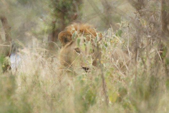 Tarangire National Park, Tanzania: ... auch er ist in der Nähe des Picknick-Platzes