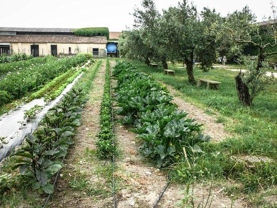 Lamezia Terme, Włochy: Il nostro orto biologico