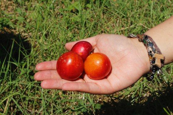 Lamezia Terme, Włochy: La selezione della frutta migliore per le nostre marmellate biologiche