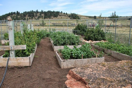 Whitewood, Νότια Ντακότα: Field to Table organic vegetable garden