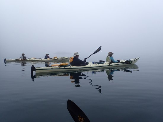 Telegraph Cove, Canada: A foggy morning on the North Broughton Trip.