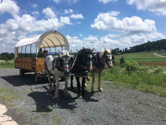 Denver, Pensilvanya: Horse Drawn Conestoga Wagon Tours
