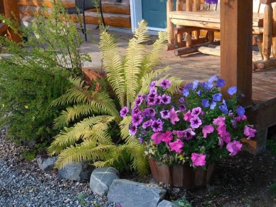 Denali Fireside Cabins & Suites: Part of the maintained garden area surrounding our suites