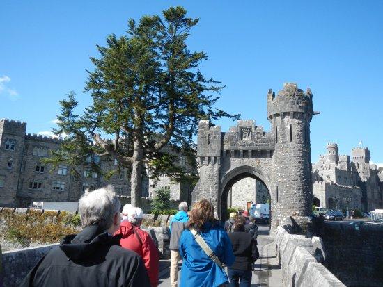 Ireland's School of Falconry: Castle Gate
