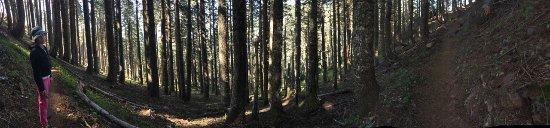 Philomath, OR: Old-growth Douglas fir