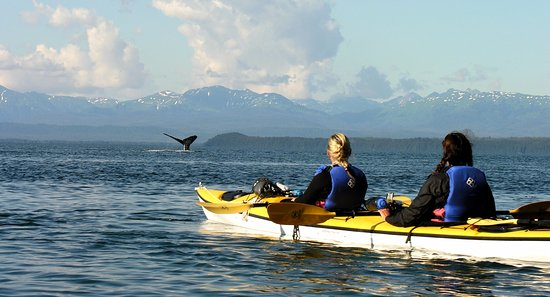 Gustavus, AK: Whale watching from the kayaks!