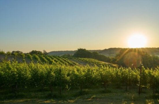 Muenster, TX: Sunrise over the vineyard at 4R Ranch Vineyards and Winery