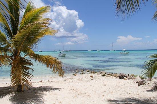 Isla Saona: Playa