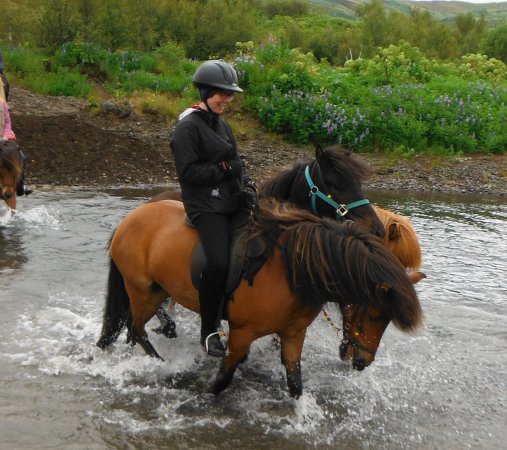 Selfoss, Islande : The two hand horses were so much fun to ride with!