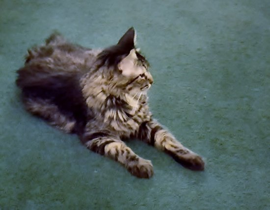 Amargosa Opera House and Hotel: Catty that likes to roam the hotel