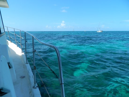 Tavernier, FL: Beautifully clear water at the reef
