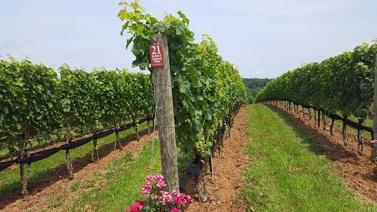 Ashburn, VA: Stone Tower Winery