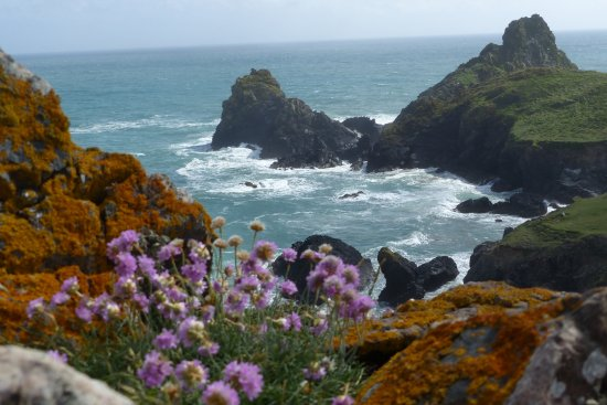 The Lizard, UK: Sea thrift and lichens add colour to the scene