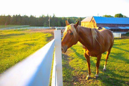 Equita Ranch照片
