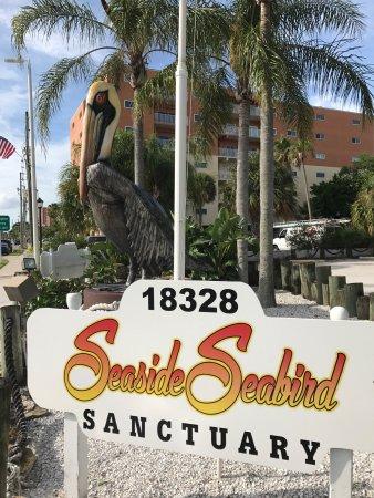 Seaside Seabird Sanctuary: photo0.jpg