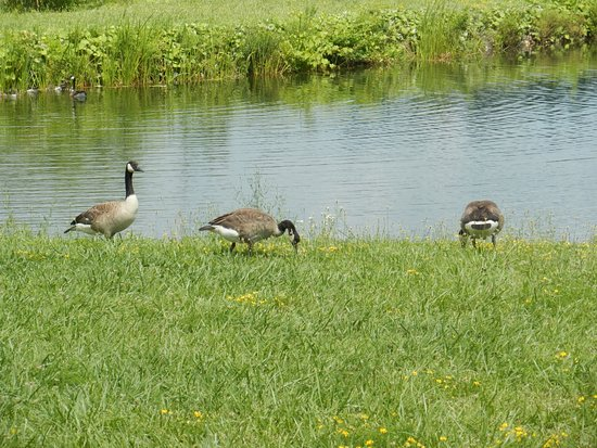 Round Lake, Estado de Nueva York: some friends along the way