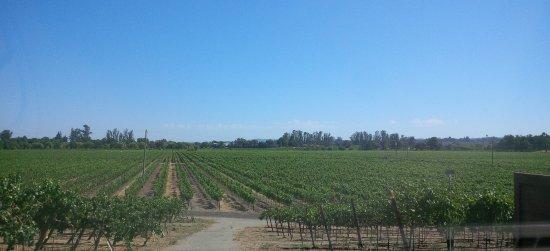 Windsor, CA: View from the front door