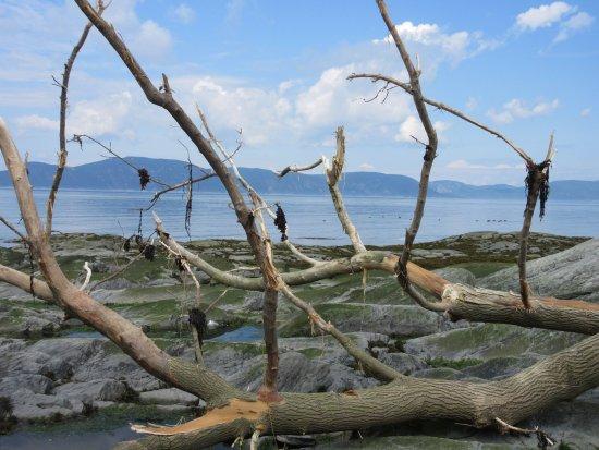 Île aux Lièvres: sur la grève