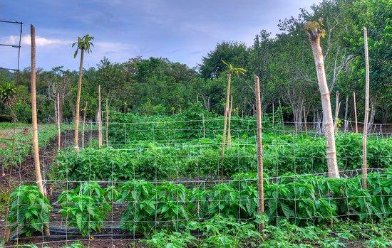 Rincon de La Vieja, Kosta Rika: Huerta Integrada Orgánica/Organic Integrated farm.