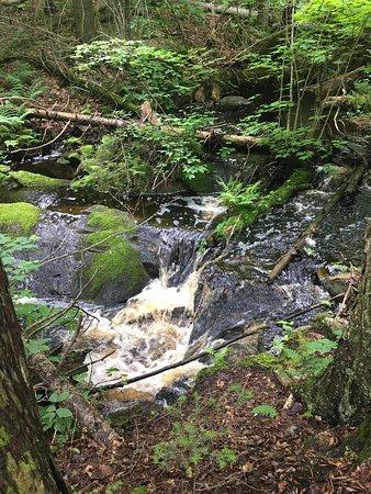 Algonquin Provincial Park, Canadá: photo2.jpg