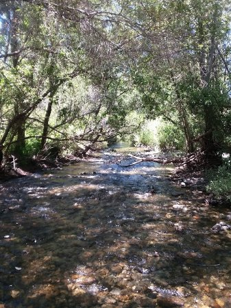 Carmel Valley, Kalifornia: Babbling brook, wish you could hear the sounds.