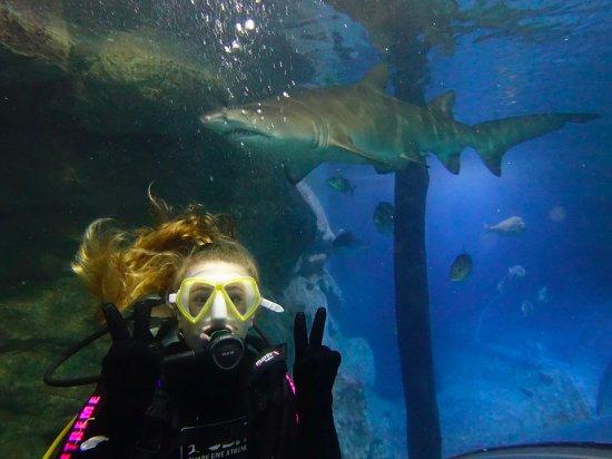Manly, Avustralya: Shark Dive Extreme