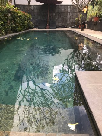 The Studio Bali: photo0.jpg