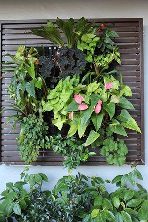 Yandina, ออสเตรเลีย: Wall garden at the entrance
