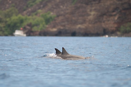 Kealakekua, Hawaje: Saw two large pods of spinner dolphins!