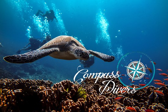 Compass Divers