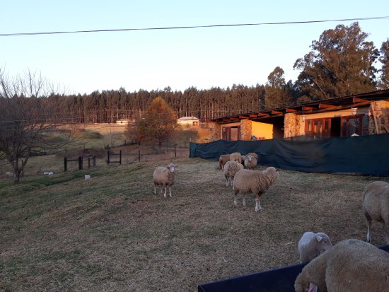 Ardmore Guest Farm: the animals on the farm add to the ambience and serenity