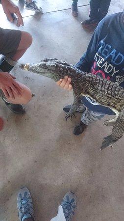 Ballito, South Africa: Mini croc