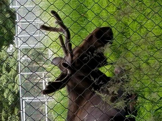 Alaska Zoo Anchorage Top Tips Before You Go Tripadvisor